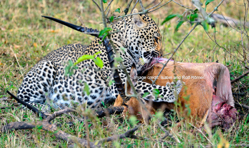 LeopardMara