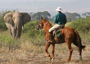 Horseback & Camelback riding