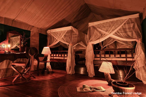 Gombe Forest Lodge