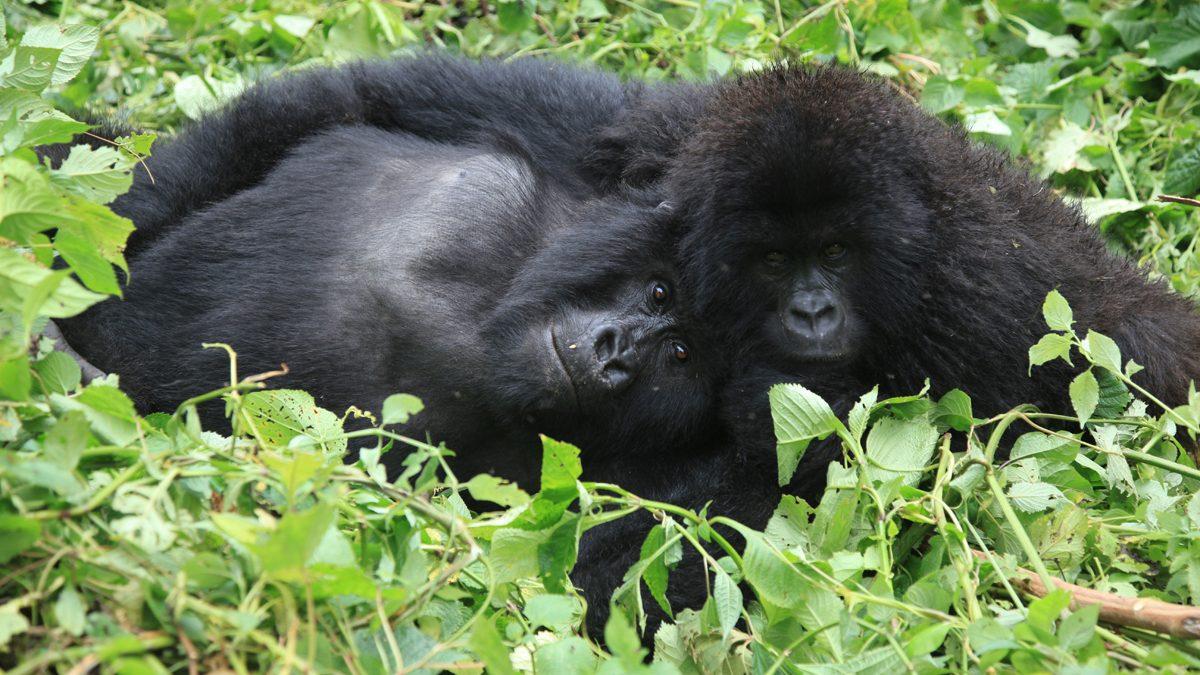 Gorilla Ventures