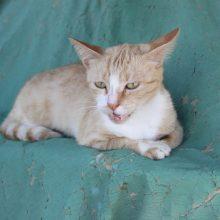 The Cats of Lamu