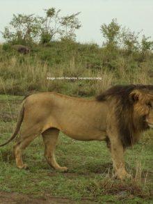 It's Lion Day!