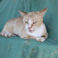 The Cats of Lamu