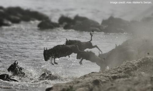 WildebeestCrossingAWS