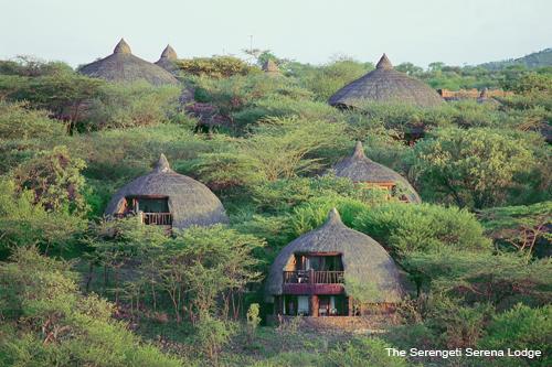 Serengeti Serena